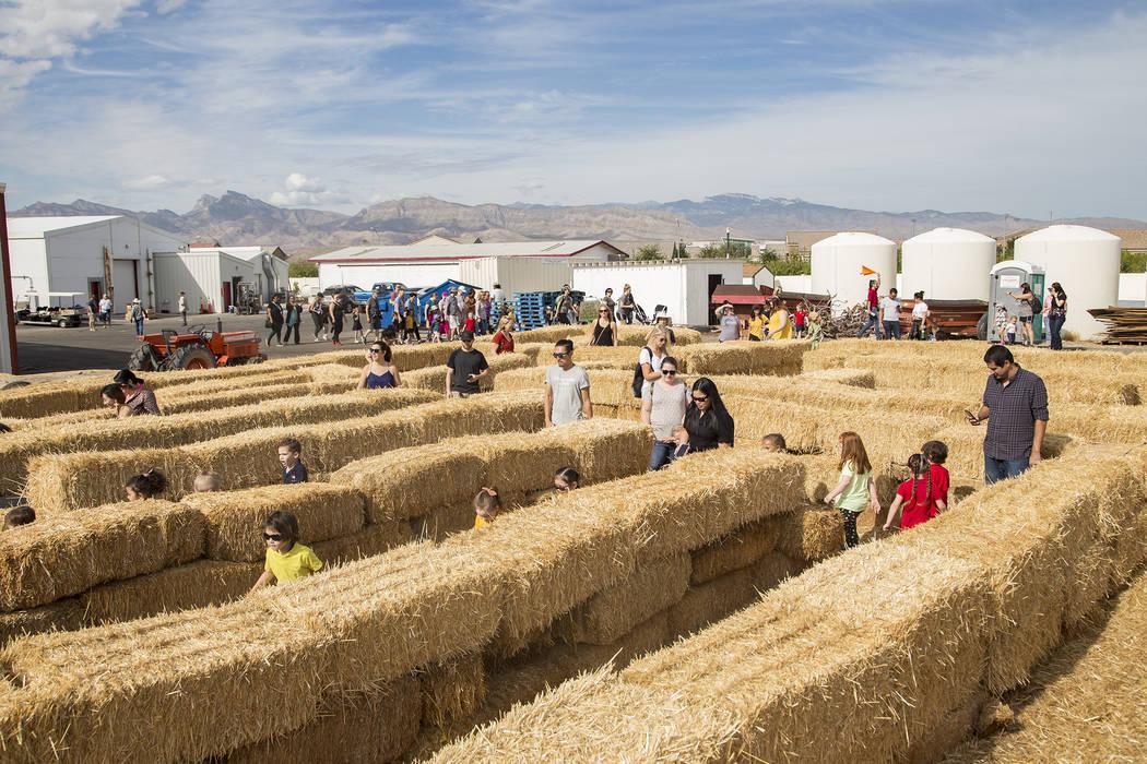 Los invitados corren por el laberinto de paja en Gilcrease Orchard en Las Vegas, el jueves 26 d ...