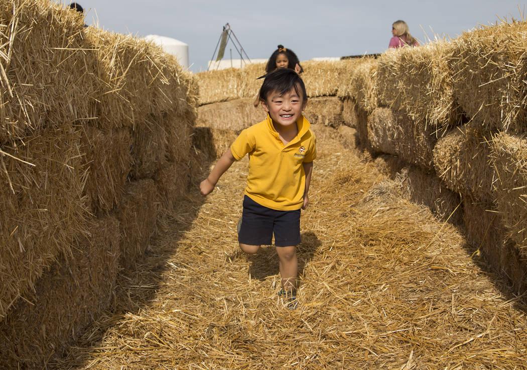 Dominic Teng, de 4 años, corre por el laberinto de paja en Gilcrease Orchard en Las Vegas, el ...
