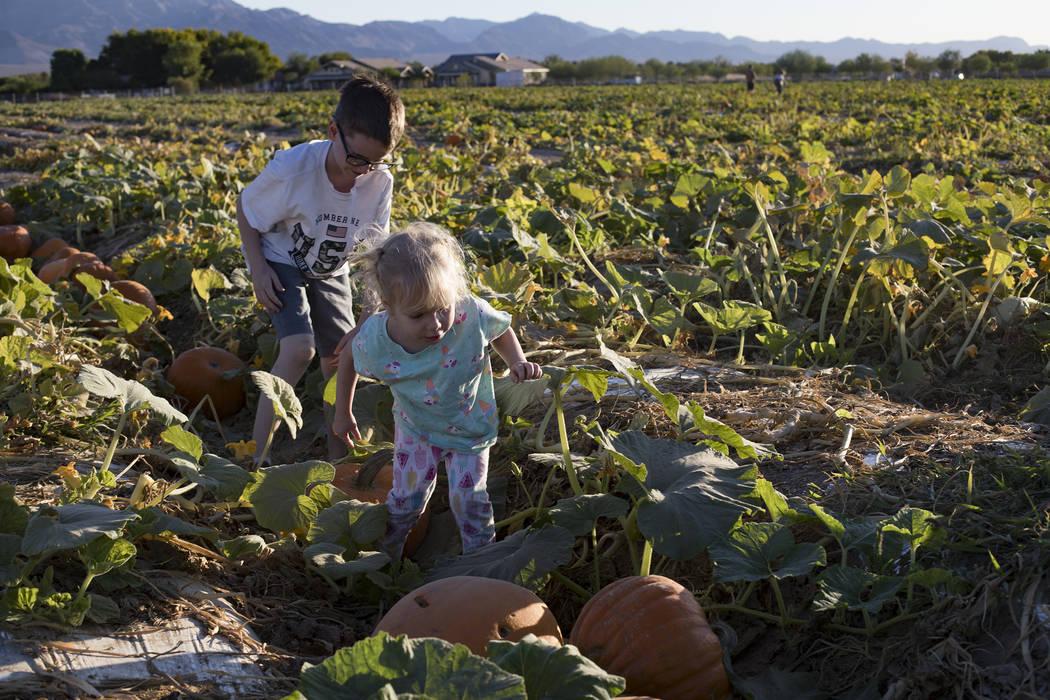 Elijah W., de 9 años, ayuda a su hermana Emma-lee W., de 5 años, a recoger una calabaza en Gi ...