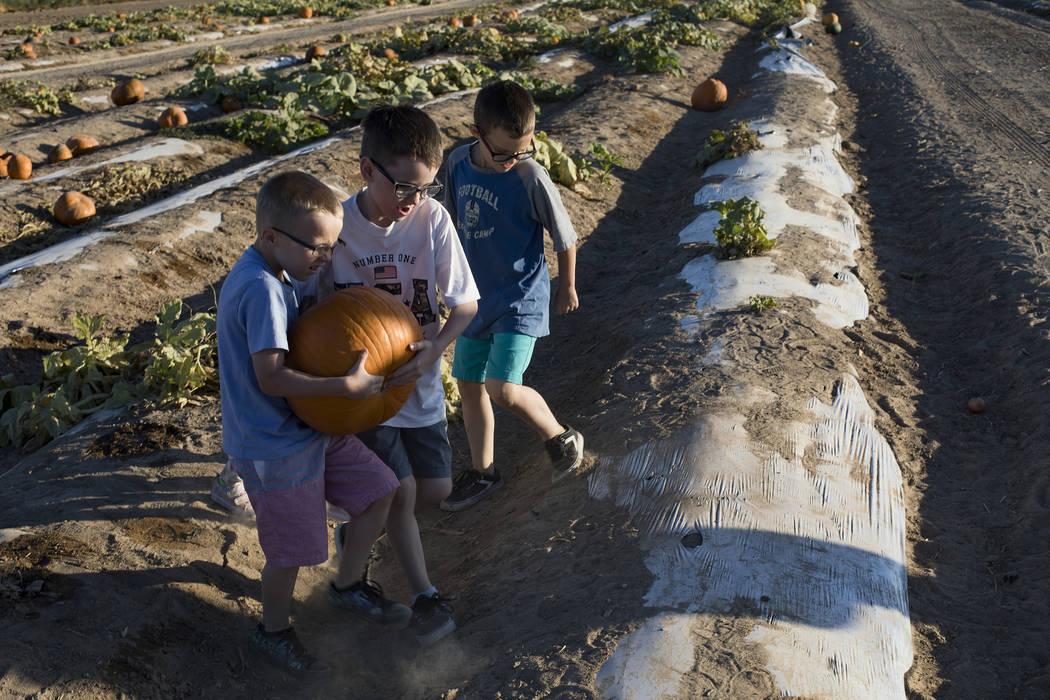 Dennis W., 7, desde la izquierda, y Elijah W., 9, llevan una calabaza junto a su hermano Domini ...