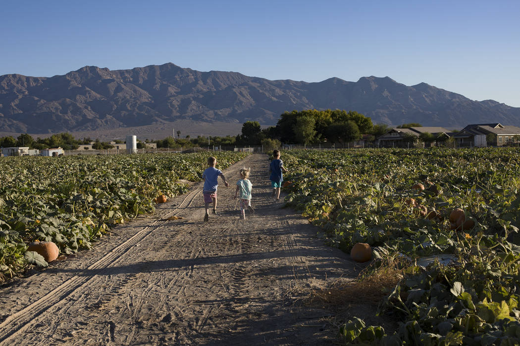 Dennis W., 7, desde la izquierda, corre con sus hermanos Emma-lee W., 5, y Dominic W., 9, a tra ...
