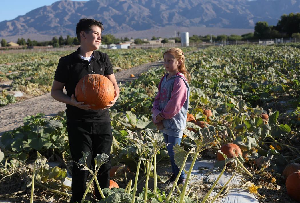 Luke Swasey, de 11 años, recoge calabazas con su hermana, Ella Swasey, de 9 años, en Gilcreas ...
