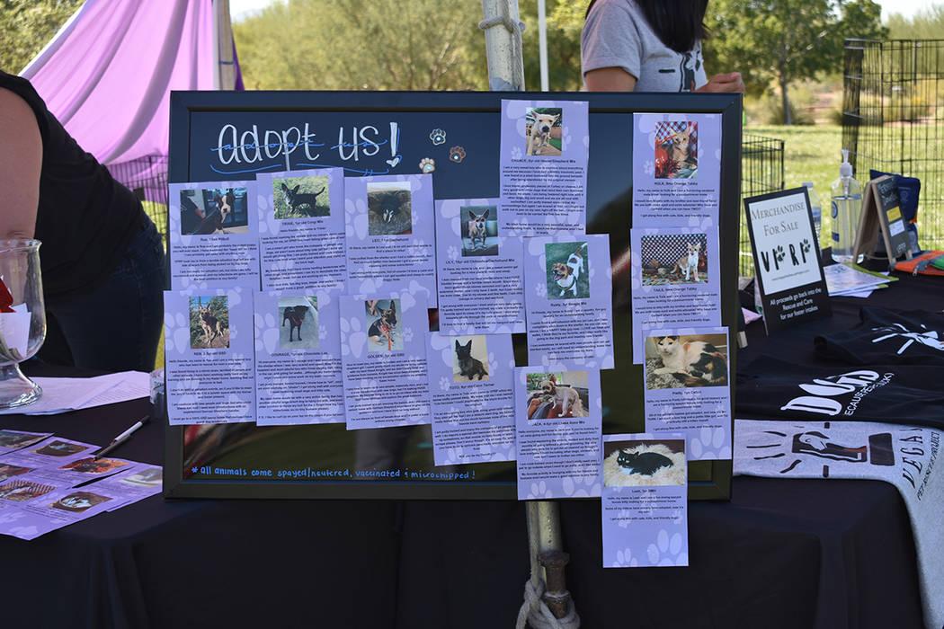 Distintas organizaciones que trabajan a favor de los animales participaron para incentivar el t ...