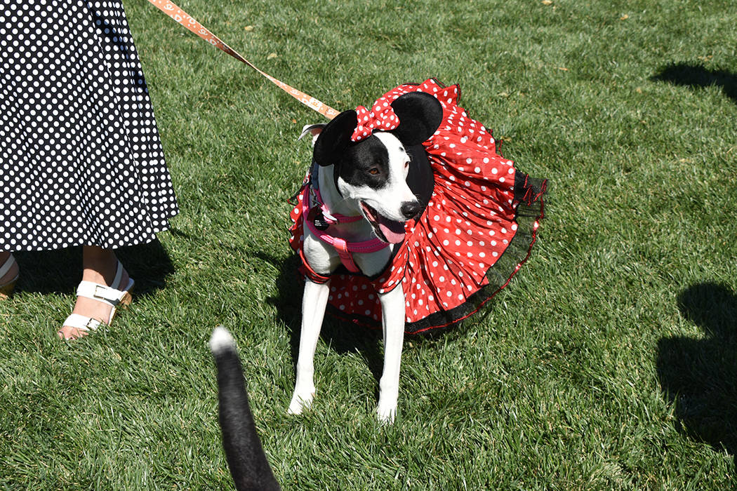 Decenas de mascotas participaron con sus dueños en un divertido concurso de disfraces de Hallo ...