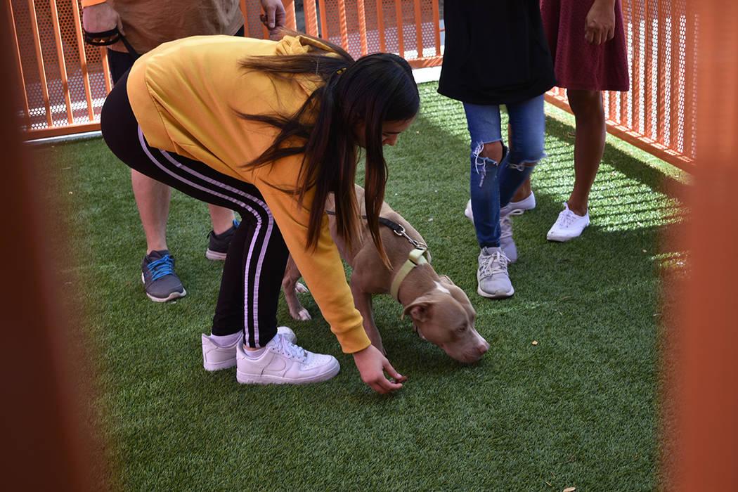 Decenas de personas acudieron a la doble jornada de adopción de mascotas impulsada por Dignity ...