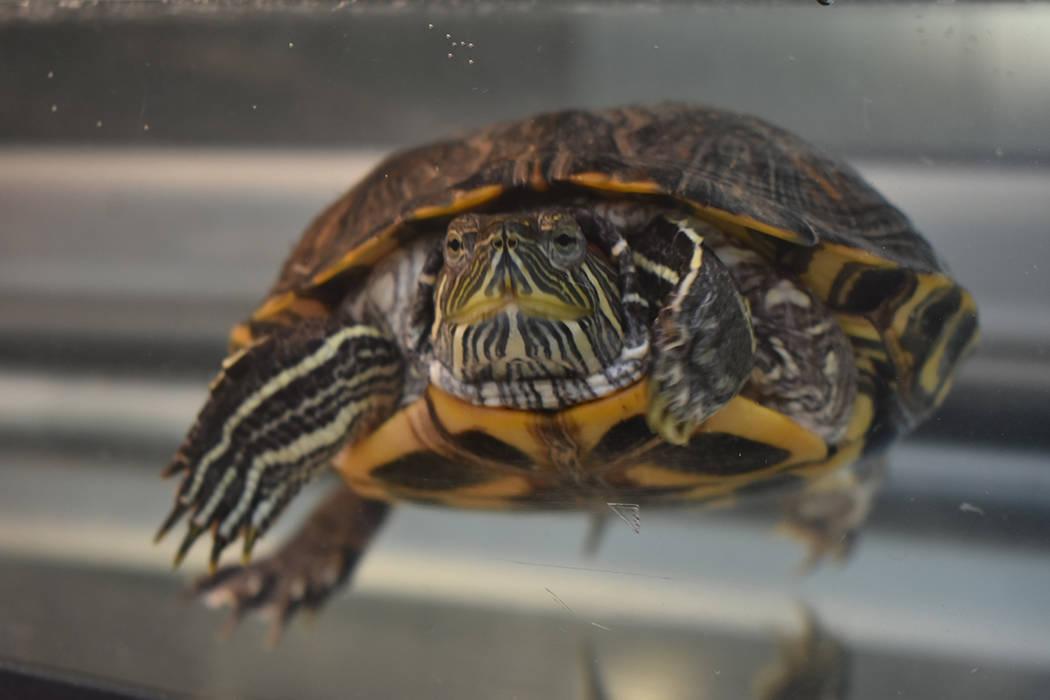 Además de perros y gatos, en el refugio se pueden encontrar a otros animales como tortugas, pe ...