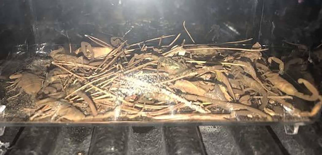 Una evidencia de una demanda muestra alacranes encontrados en una propiedad del valle este. Una ...