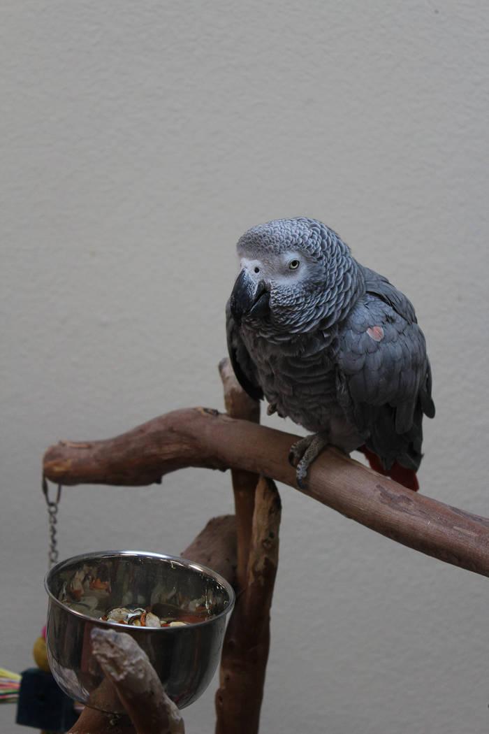 El aviario Priscila de SWEAR tiene aves valuadas en más de $20 mil dólares. Domingo 15 de dic ...