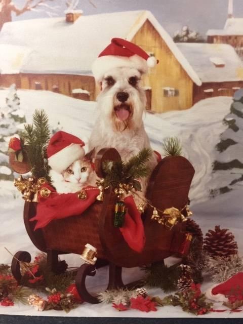 Ángel el gato y Pretzel el perro. Sent from my iPhone