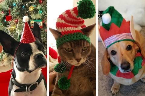Una muestra de las mascotas de los lectores del RJ para las fiestas.