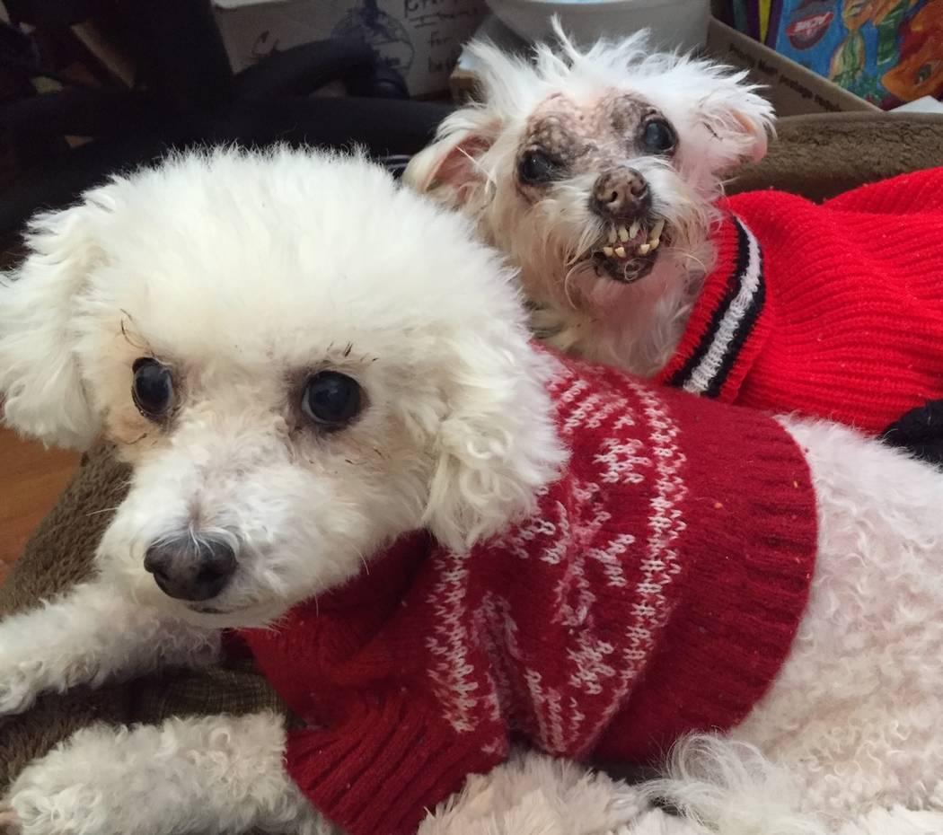 Chumley y Mopsy De, Dianne