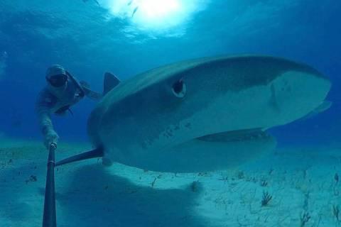 """Un fotograma de la próxima película de realidad virtual del Shark Reef Aquarium, """"Shark Div ..."""