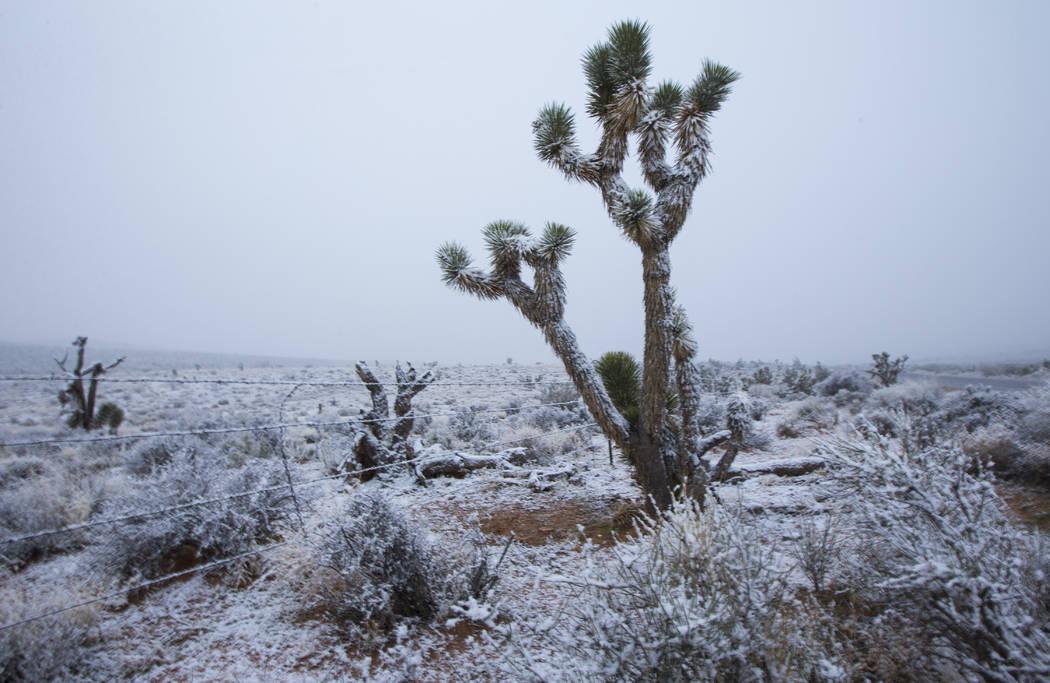Nieve cae a lo largo de la Ruta Estatal 159 alrededor del Área de Conservación Nacional del C ...
