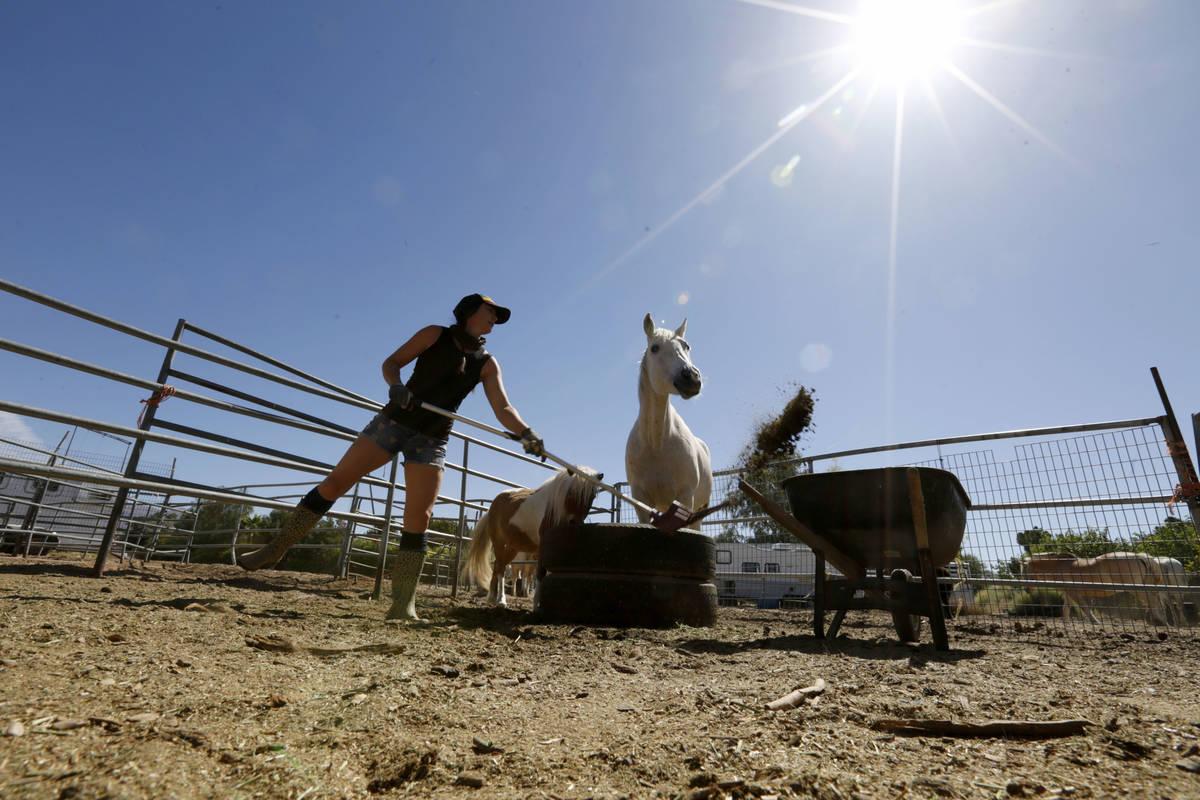 La artista de Gladius The Show, Alethea Shelton, limpia el Rancho Gladius de Las Vegas el lunes ...