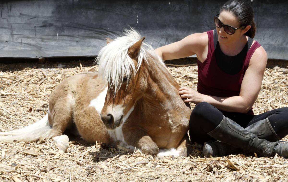La copropietaria de Gladius The Show, Alethea Shelton, se sienta con Spirit, un caballo en mini ...