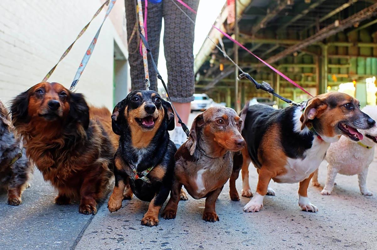 Un veterinario local ofrece servicios de telesalud para mascotas. (Getty Images)