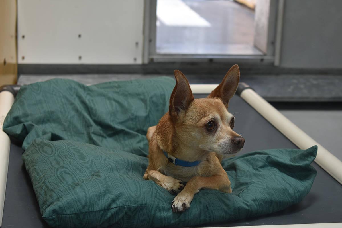 Decenas de perros fueron puestos en adopción de manera gratuita o a bajo costo, gracias a Biss ...
