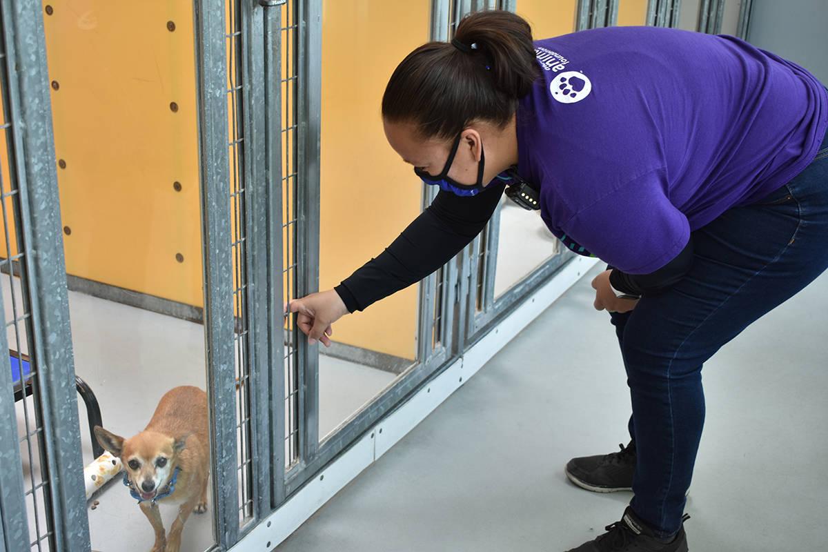 La gerente de adopciones de The Animal Foundation, OVERSET FOLLOWS:Brenda Arceo, explicó los m ...