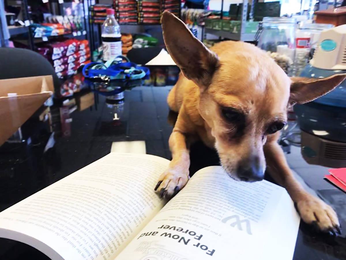 """Bodhi es un perro cuya historia está incluida en el nuevo libro """"Chicken Soup for the Soul: ..."""