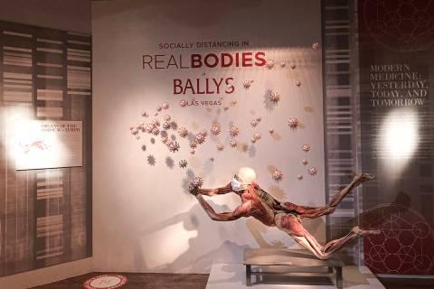 Real Bodies at Bally's revela conexiones que invitan a la reflexión entre la biología human ...