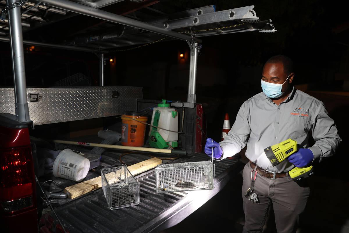 Micheal Linton, gerente de plagas y vida silvestre del Desert Squad Pest and Wildlife, con una ...