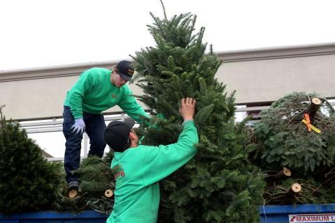 El reciclaje gratuito de árboles de Navidad ahora está disponible en más de 30 ubicaciones d ...