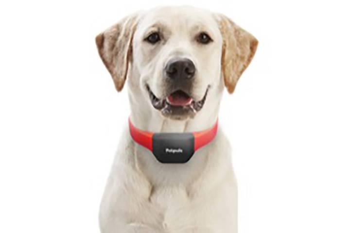 El collar de Petpuls promete revelar las emociones de tu perro. (Petpuls)