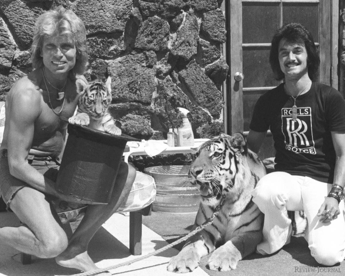 En esta foto de archivo de 1976, el tigar Magic de tres semanas de edad hace un debut público ...