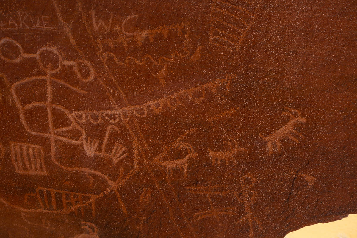 Petroglifos representan a los borregos cimarrones en Atlatl Rock, en Valley of Fire State Park ...