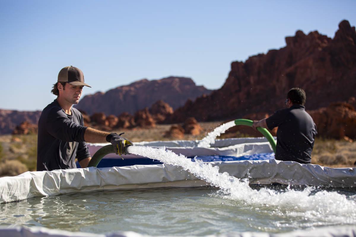 Seth Wilson, un pasante de Lathrop-Capurro con el Nevada Department of Wildlife, a la derecha, ...