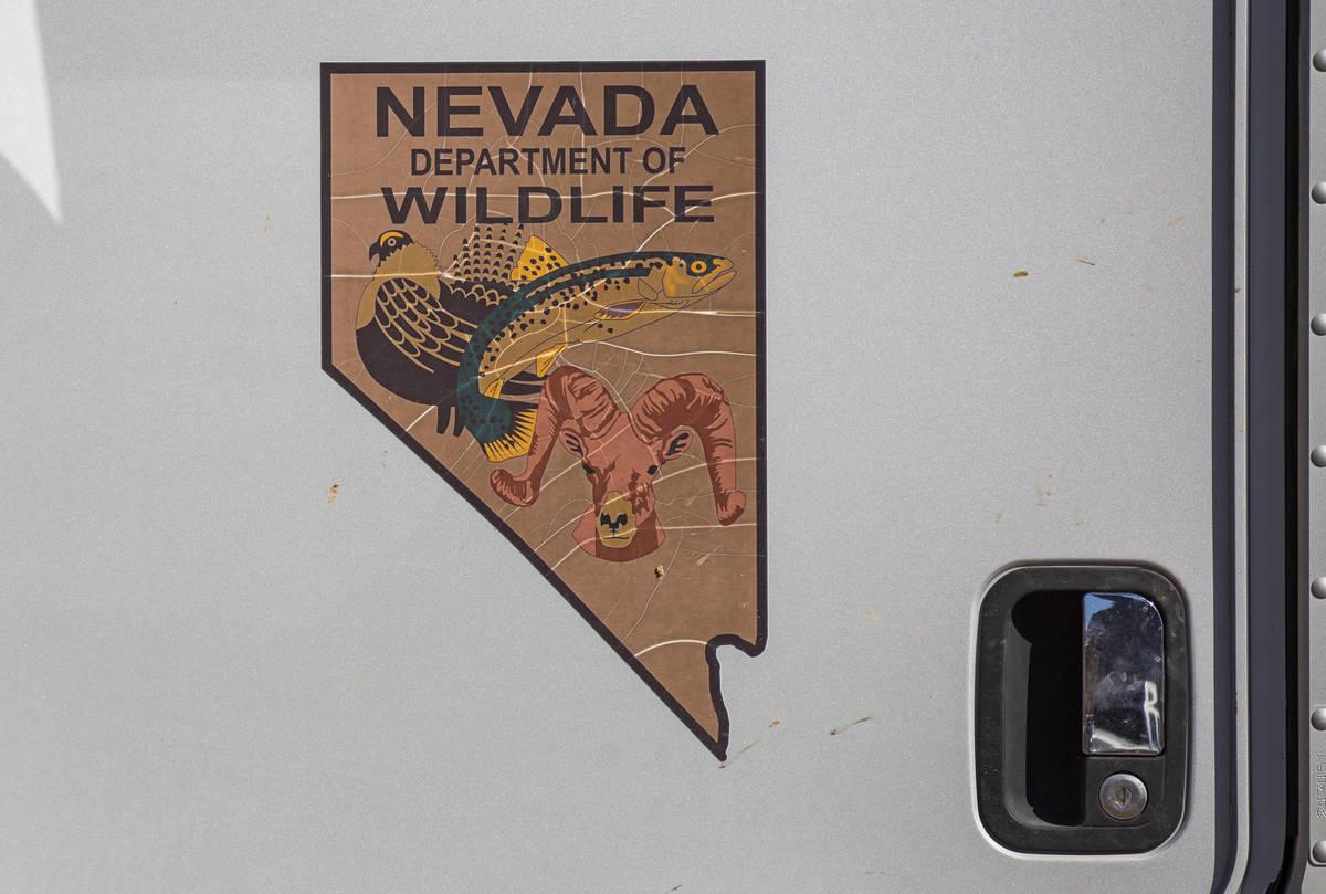 Un logotipo del Nevada Department of Wildlife se ve en un camión durante una operación de tra ...