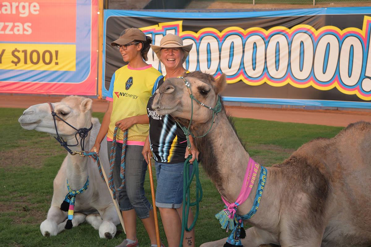 Los camellos Moisés y Abraham fueron una atracción especial, sobre todo para los niños que d ...