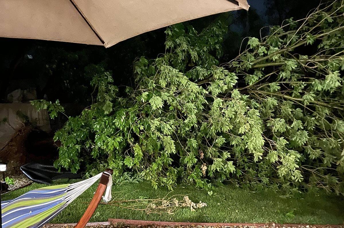 Un árbol derribado en Anthem por las tormentas del domingo 25 de julio de 2021. Dos árboles f ...