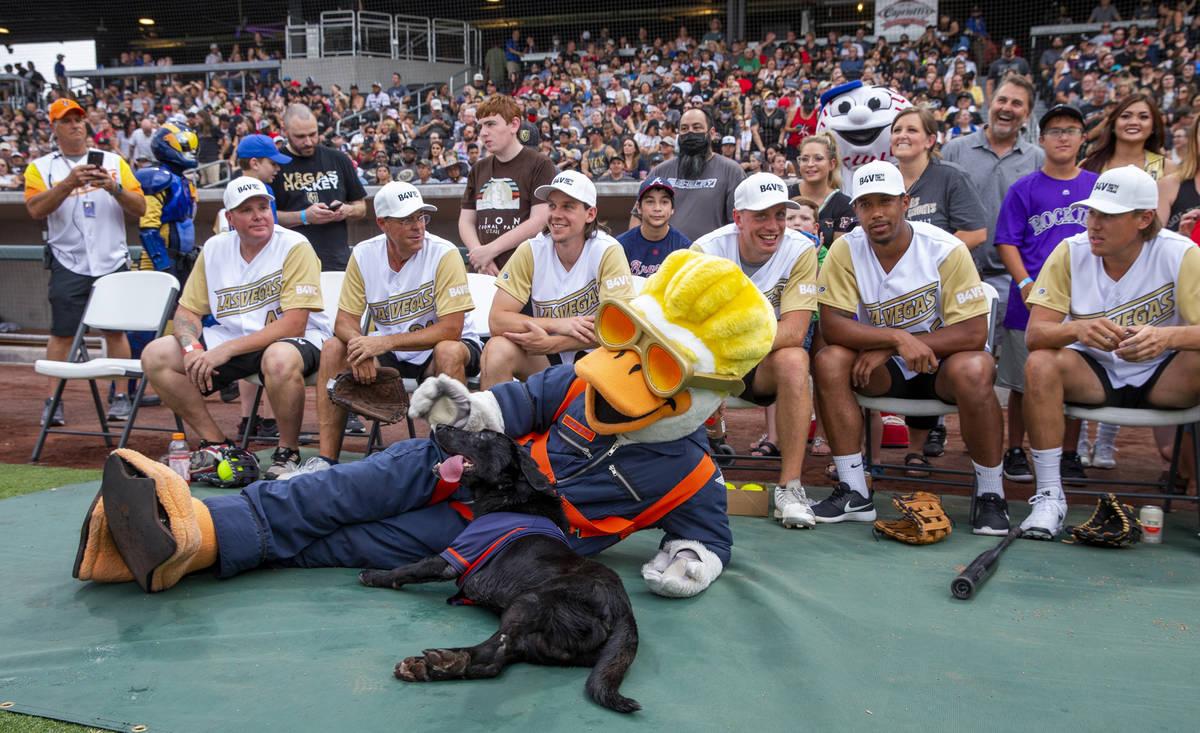 Los Vegas Golden Knights son acompañados por el Spruce Goose y el perro bateador Finn antes de ...