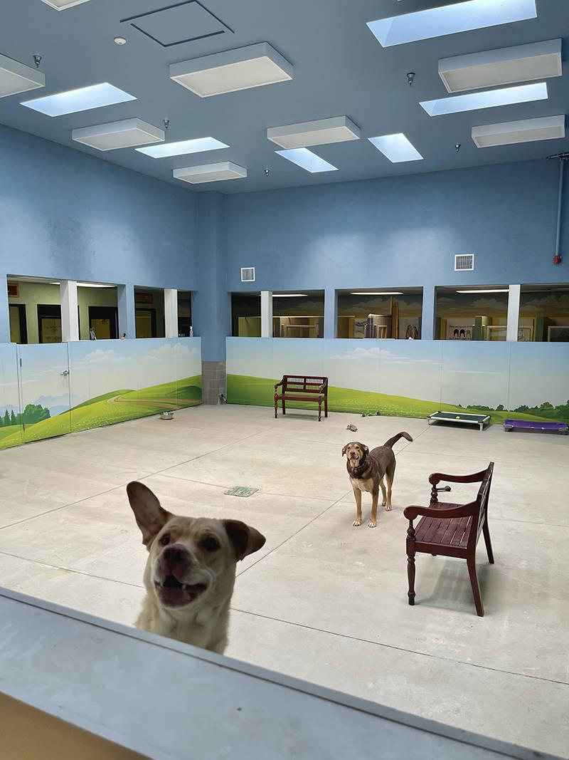 Hearts Alive Village es una organización dedicada a trabajar a beneficio de los animales sin h ...