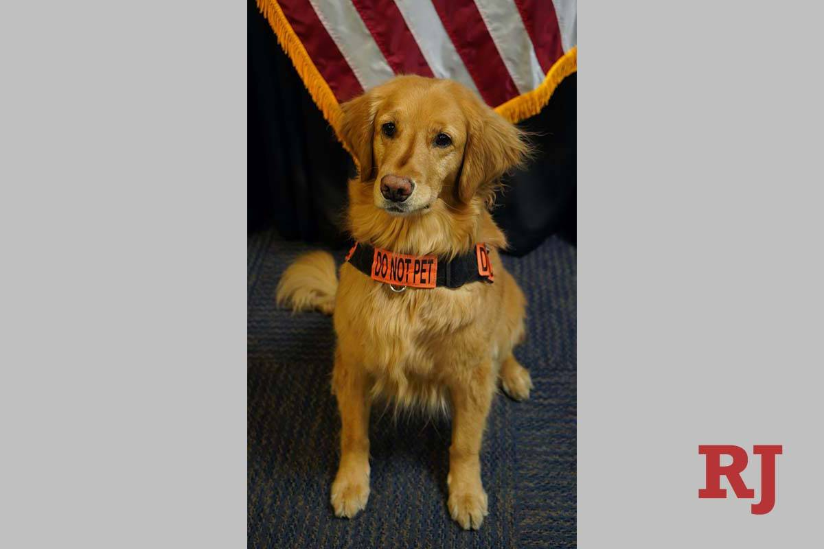 Alona fue nombrada la canina más linda de la TSA. (TSA)
