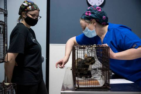 Licensed veterinary technician Kelli Fredericks, right, with volunteer Kim Heath, injects anest ...