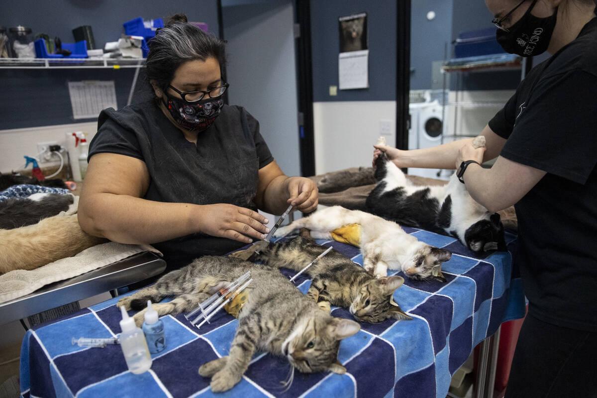 La técnica veterinaria licenciada Elizabeth Rada, a la izquierda, con la voluntaria Kim Heath, ...